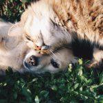Sucha karma dla kota
