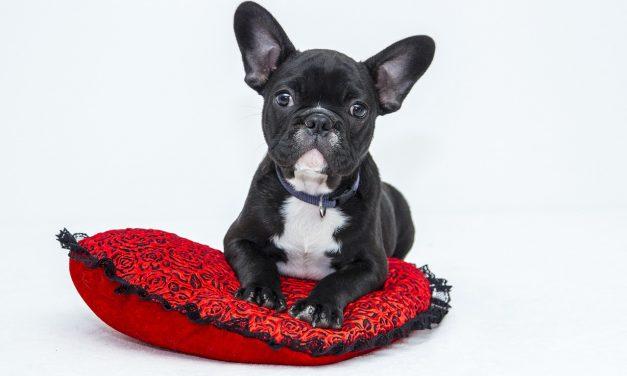 Karma dla psa – najlepszy wybór