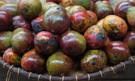 Kupujemy afrykańskie mango